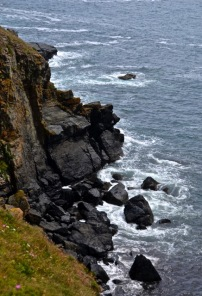 Lizard Point of View